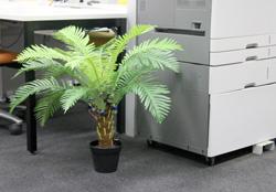 Nervous Plant