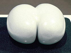 Lodoidea - Seed Pod